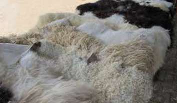 Lamb and sheepskins